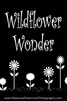 """graphic of title """"wildflower wonder"""" and wildflowers"""